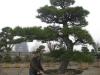 kw-7-2011-italien-nippon-bonsai-003