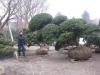 kw-7-2011-italien-nippon-bonsai-005