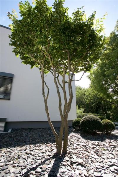 Baume Fur Den Vorgarten – Deepkiss.Info