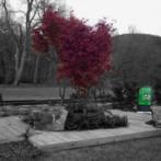 arbore 3.0